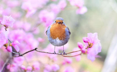 spring_bird_2295436_1280