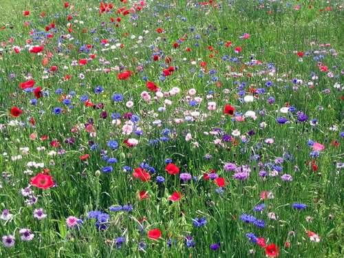 wildflowers_3